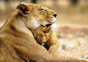 Être proactif Amour Lionne