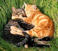 Être proactif Amour chats