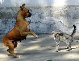 Être proactif Peur chat chien