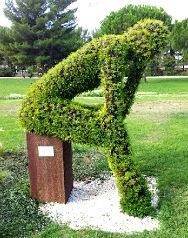 Pensée intuitive Arbuste