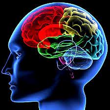 Cerveau Intelligence couleur1