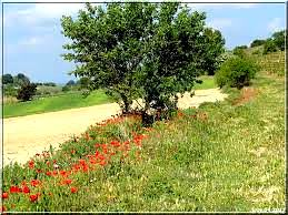 Chemin campagne1