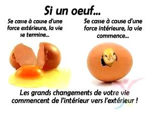 Changement Oeuf poussin1