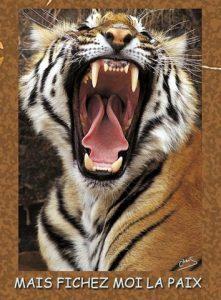 Lion Fichez moi la paix1