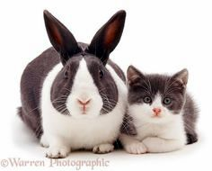 Ressemblance lapin chat