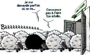 être proactif mouton adaptation1