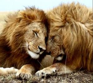 Être proactif Amour Lion