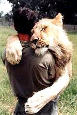 Être proactif Lion Homme le pardon