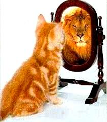 Chat miroir lion1