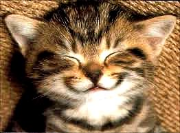 Chat sourire1