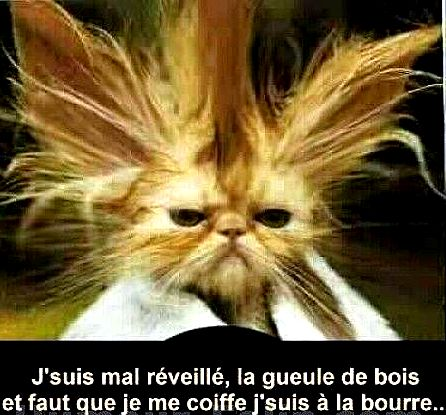 Changement chat1