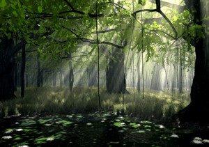 Rai de lumière jardin1